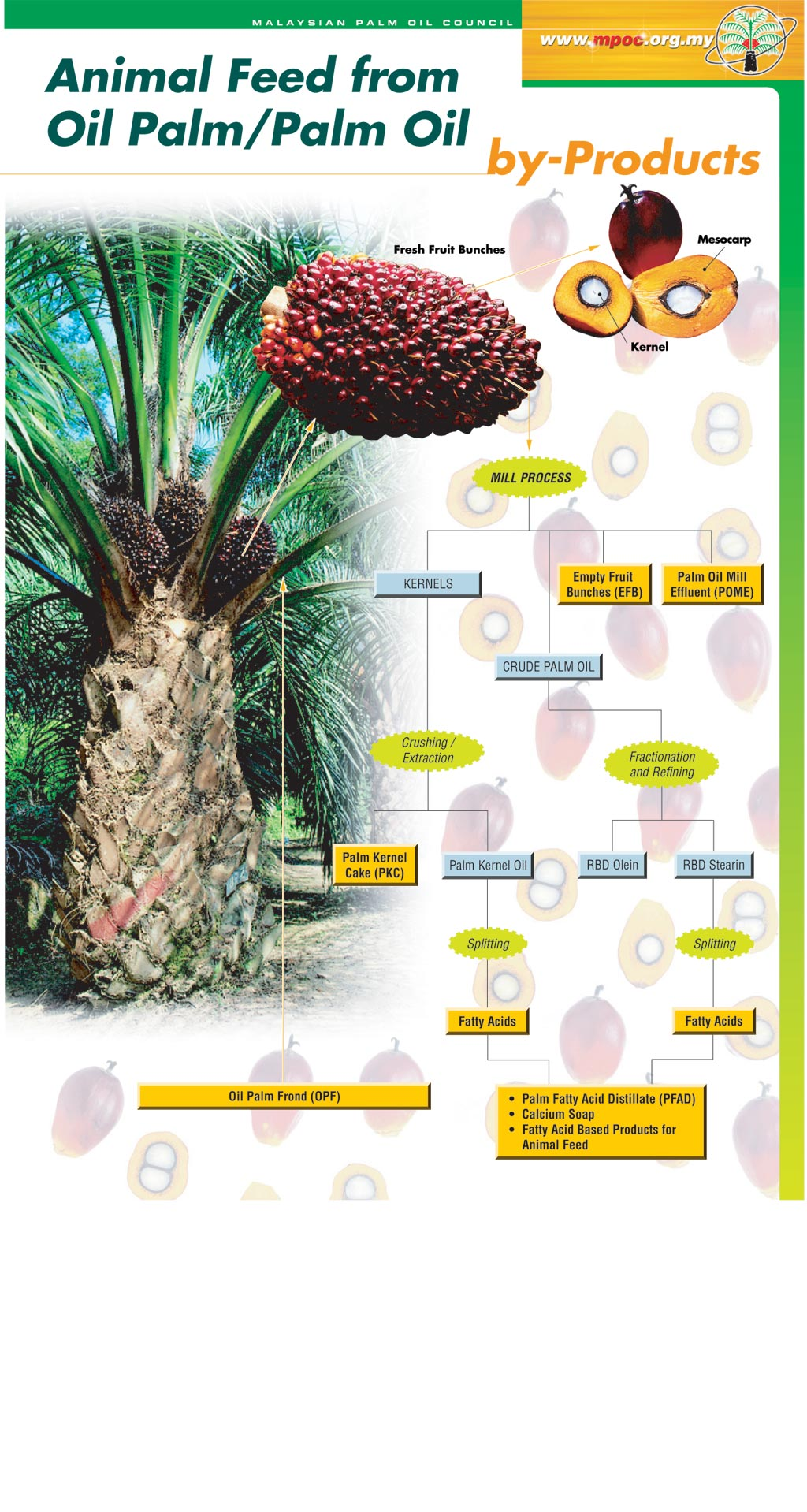 Palm Oil Industry A Learning Experience